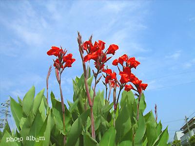 すべての講義 50音 カタカナ : カンナ|flower.heartfullunch.com|花 ...