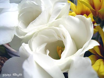 きょうの誕生花(7月12日):トルコギキョウ(トルコ桔梗)